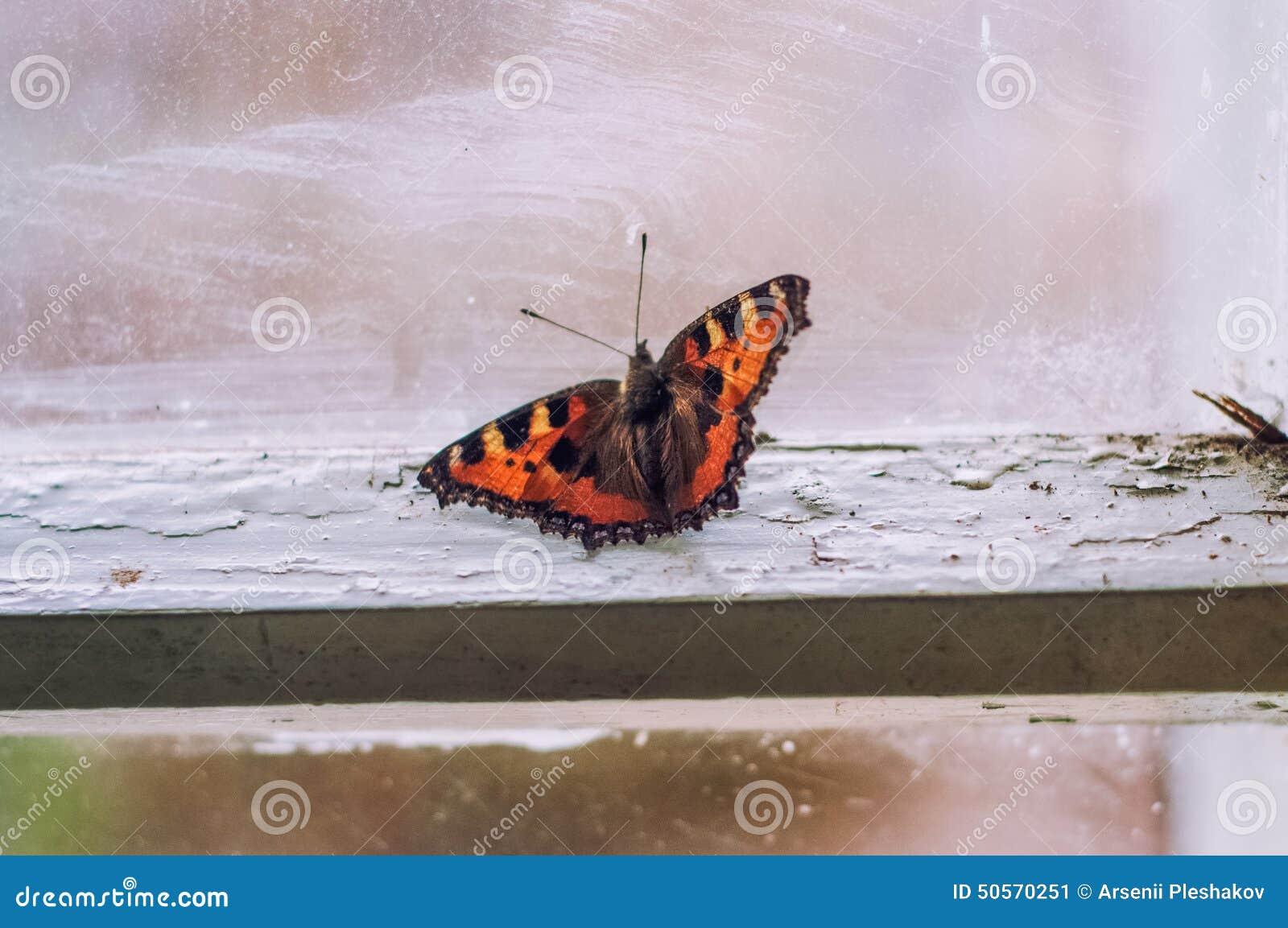 Бабочка в доме почему