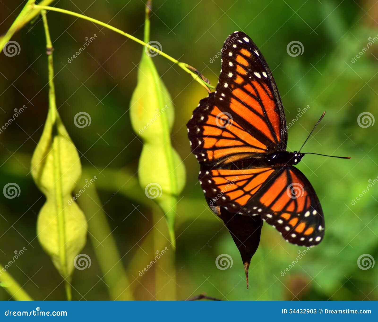 Бабочка в природе