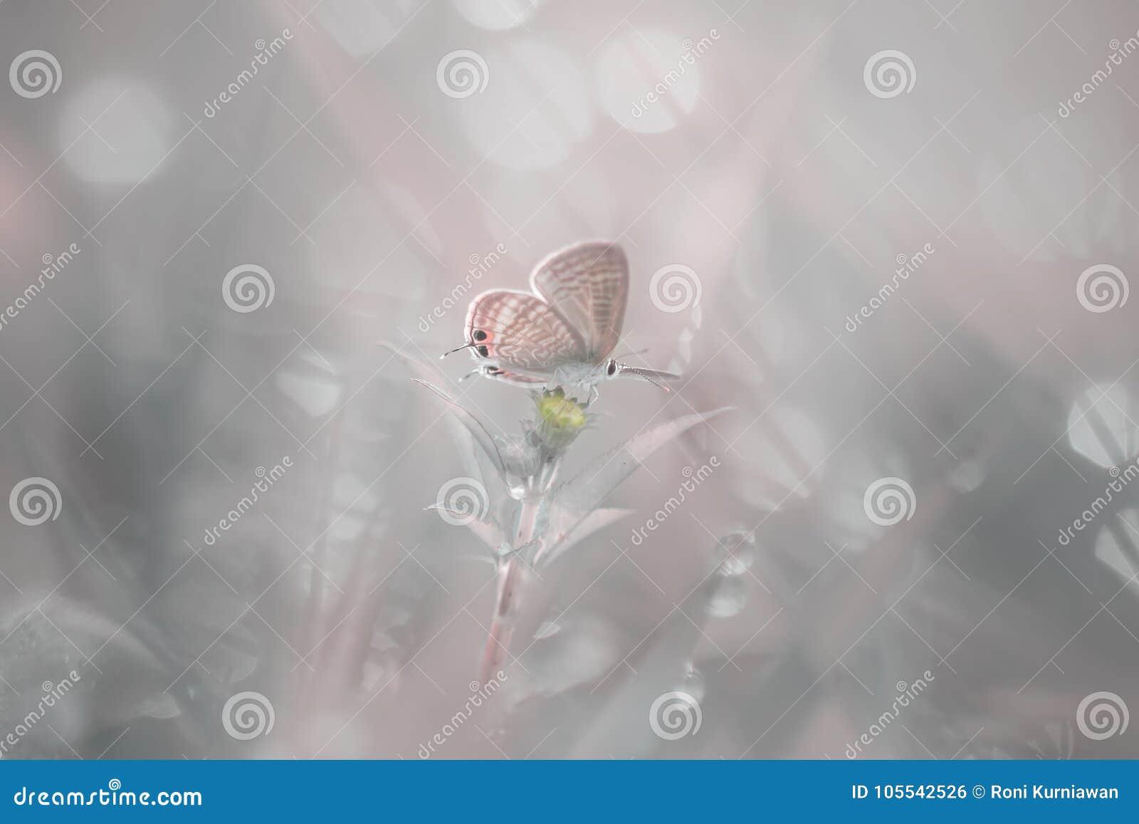 Бабочка, животные, макрос, bokeh, насекомое, природа,