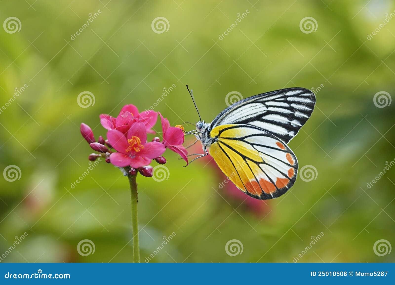 Бабочка и красный цветок