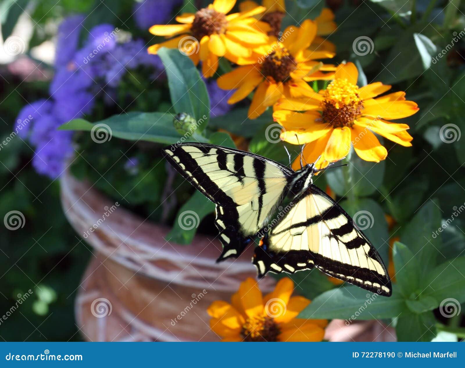 Download Бабочка и цветочный горшок стоковое фото. изображение насчитывающей артишоков - 72278190