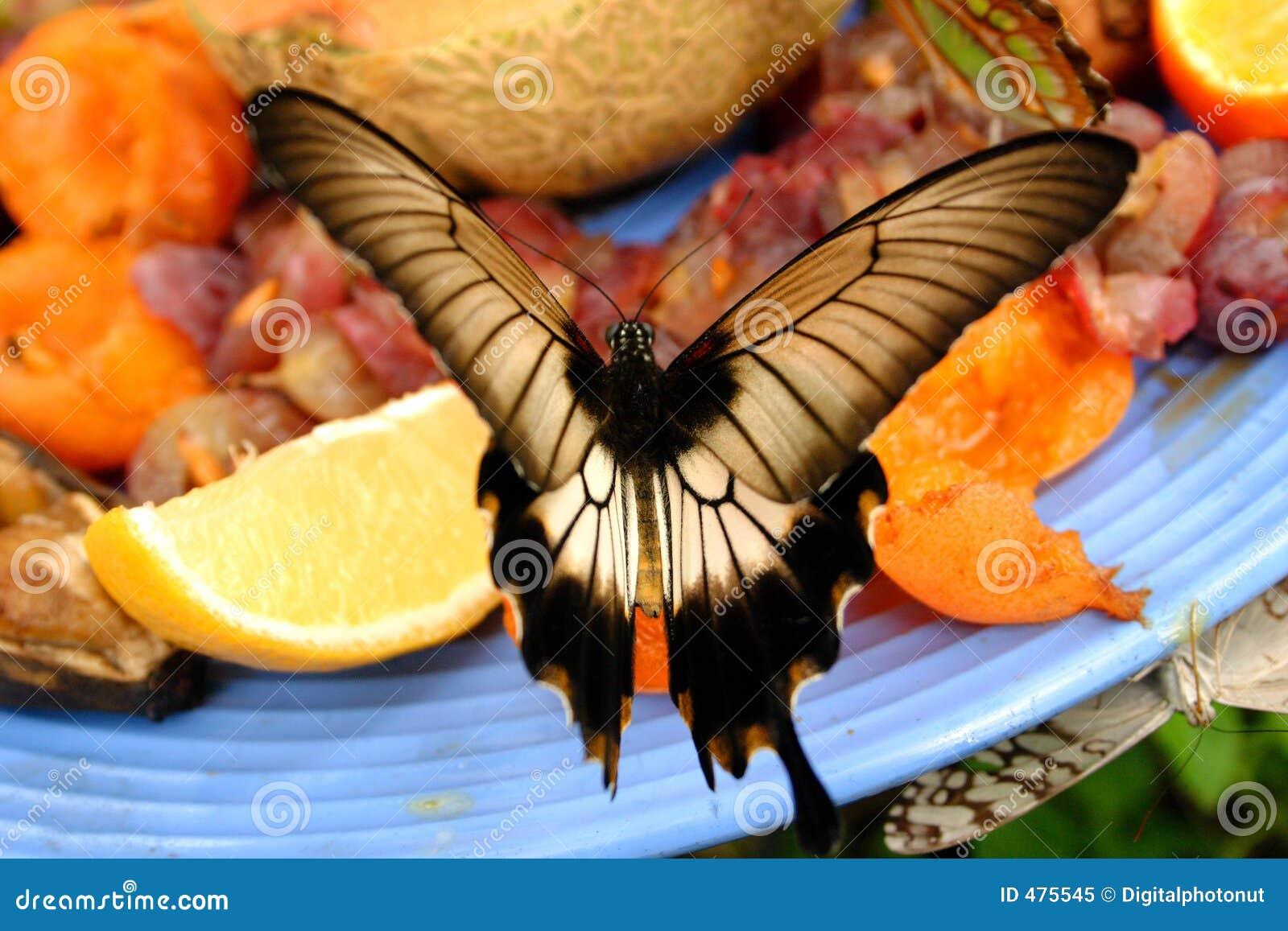 бабочка наслаждается плитой плодоовощ