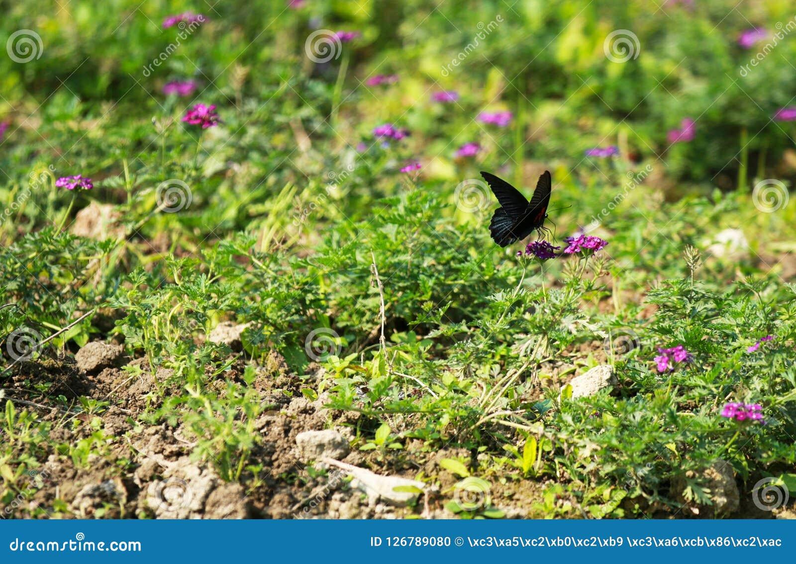 Бабочка порхая среди цветков