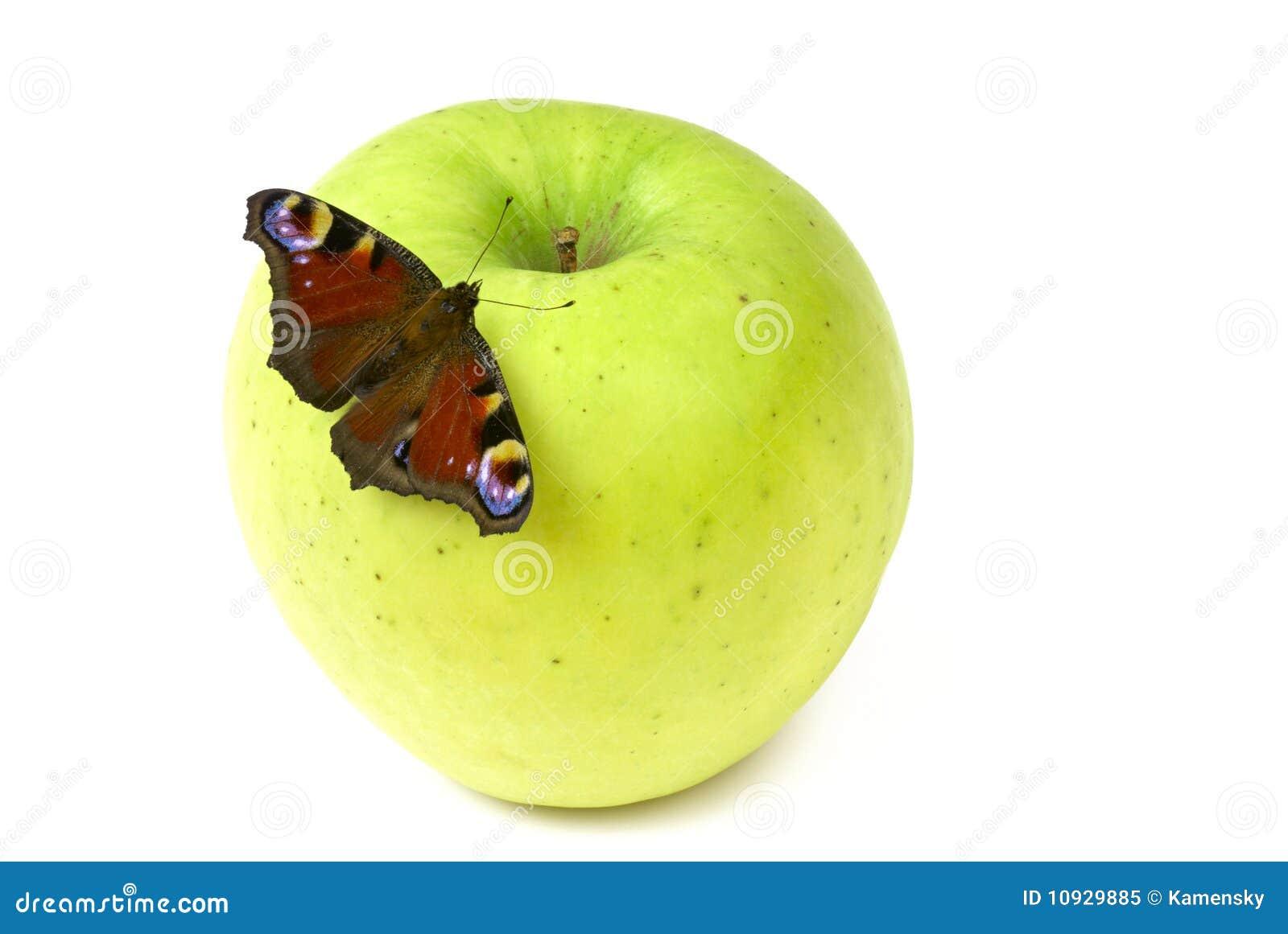 бабочка яблока