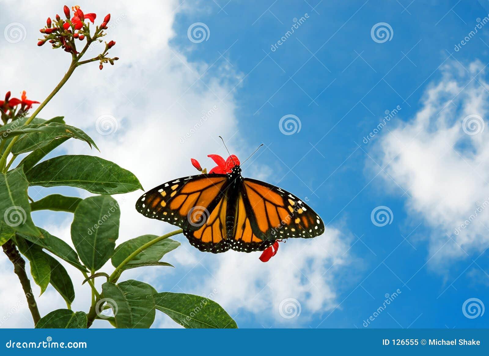 бабочка 9a