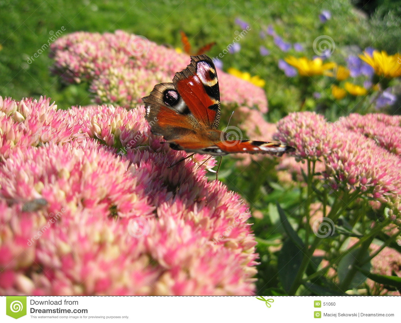 бабочка i