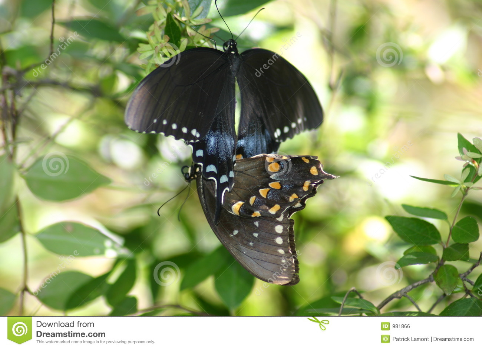 бабочка s