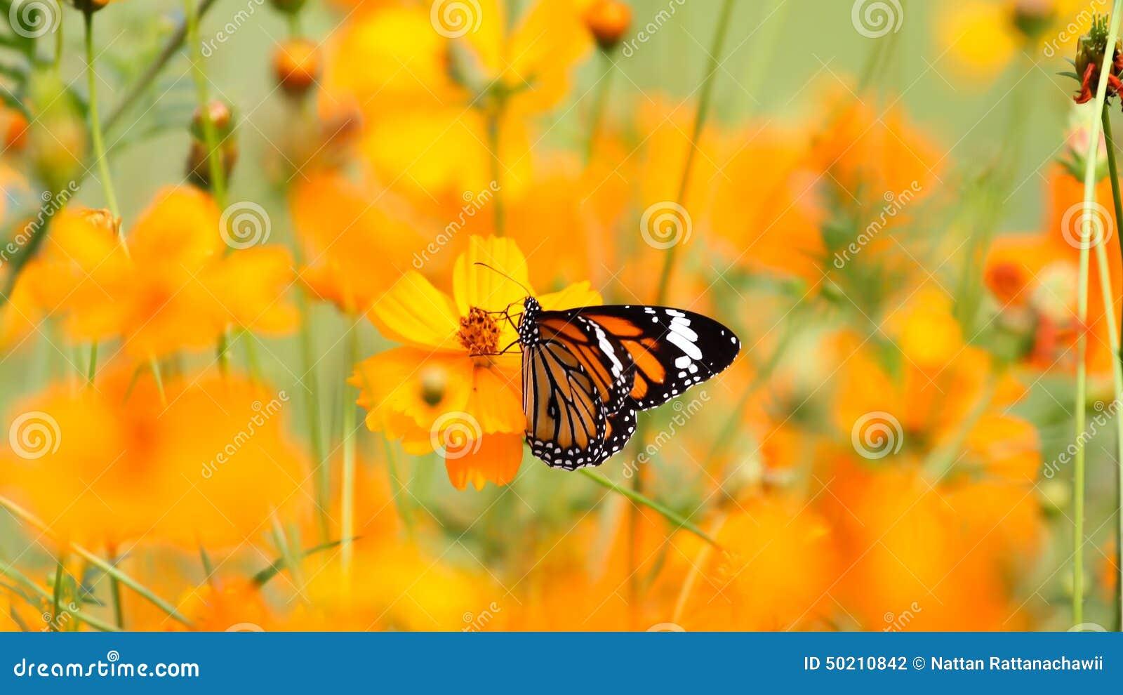 Бабочки среди цветков