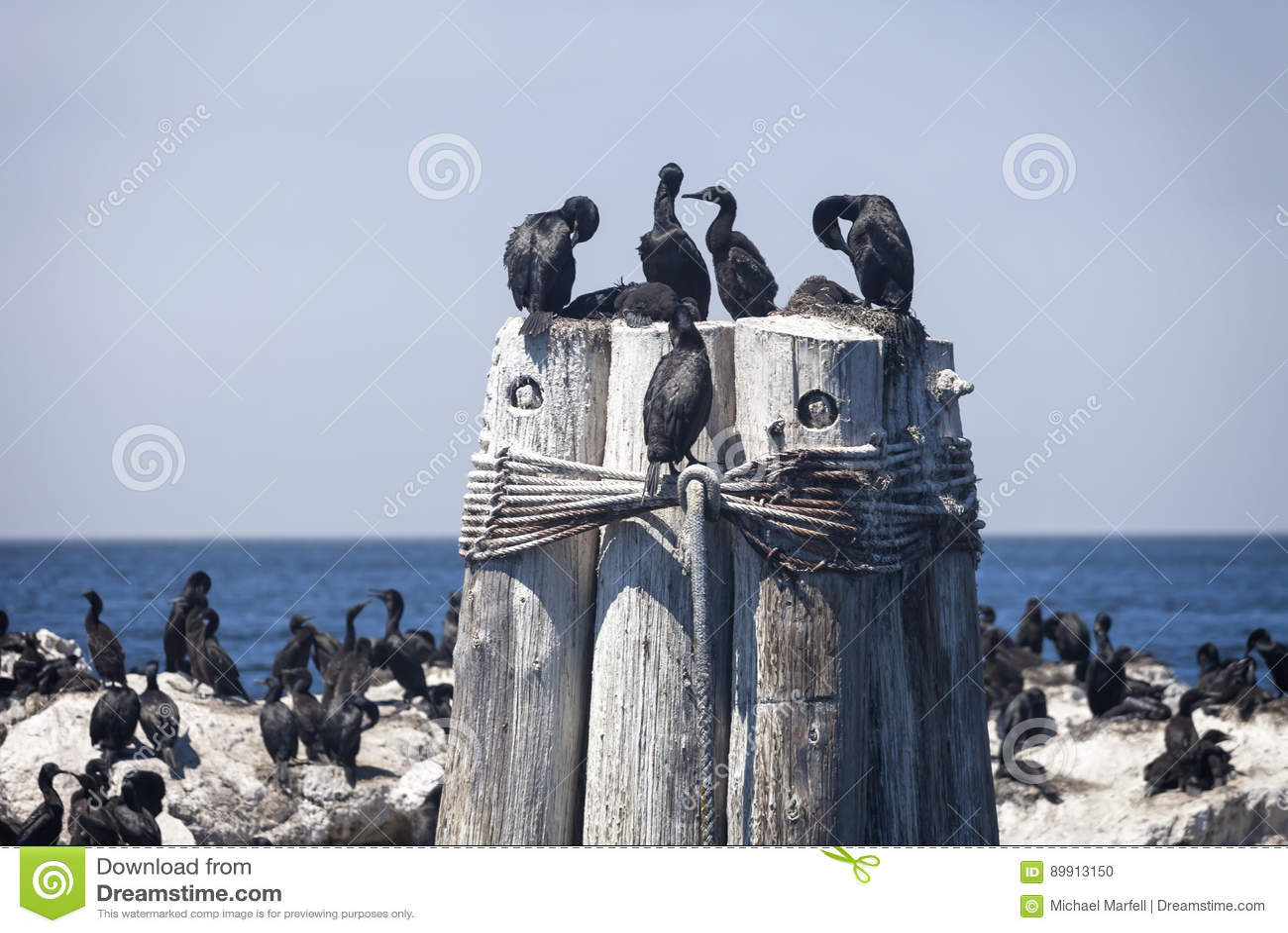 Баклан на штабелевке моря