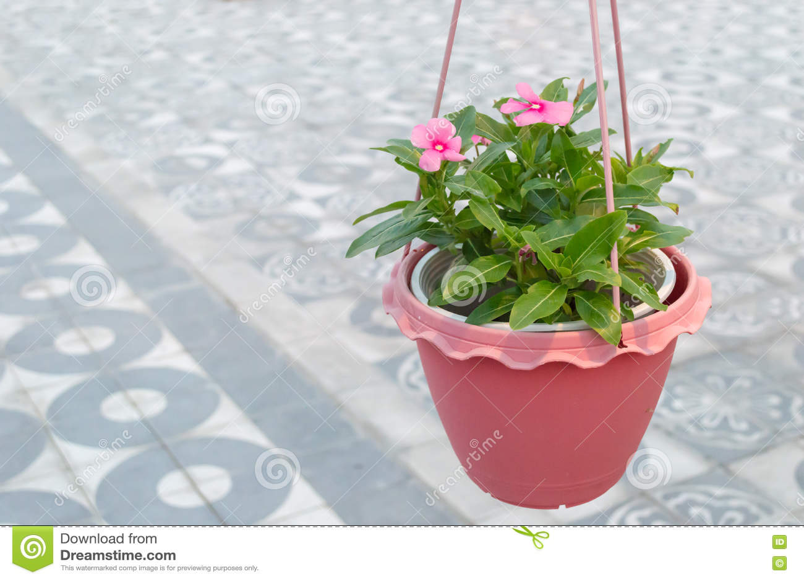 Бак с цветками