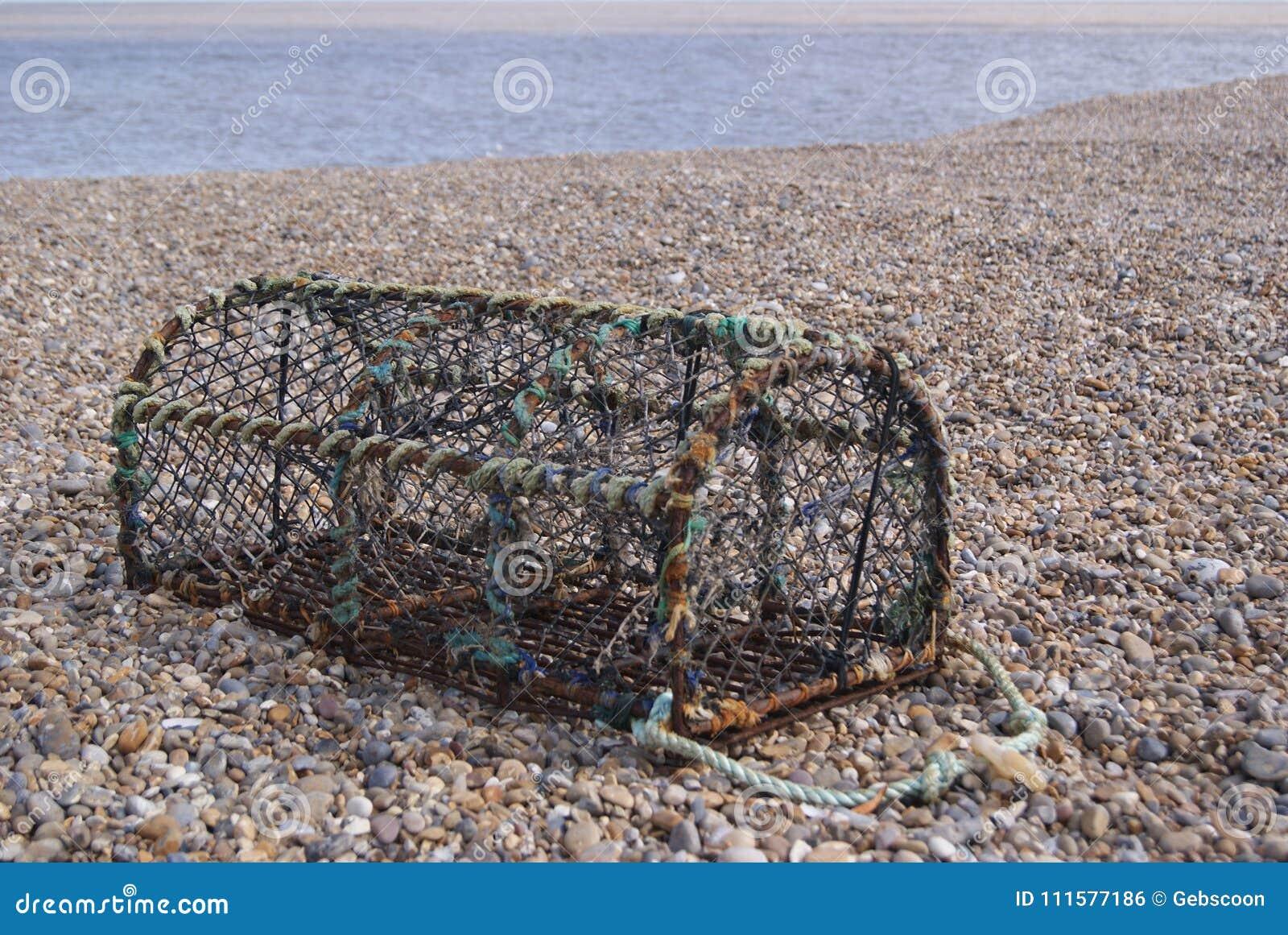 Бак Crabbing на теплом каменистом пляже