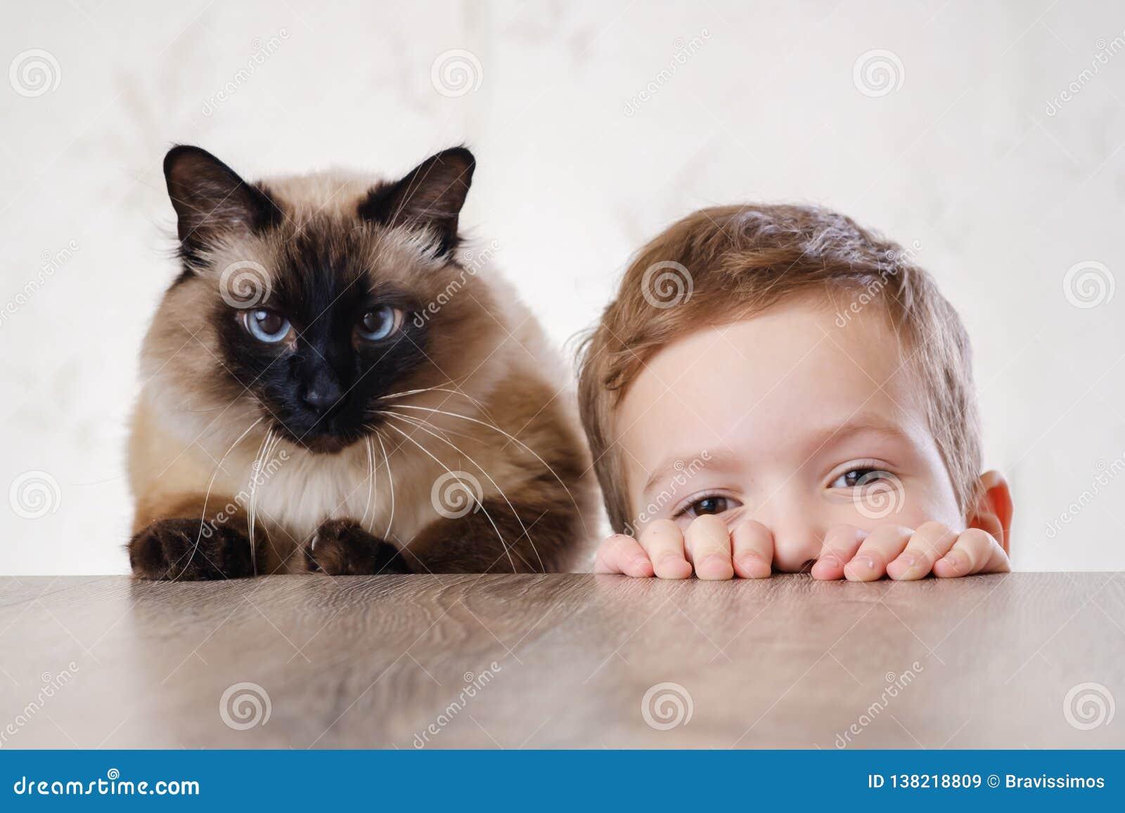 Балиец ребенка кота совместно сыграть Животное милое