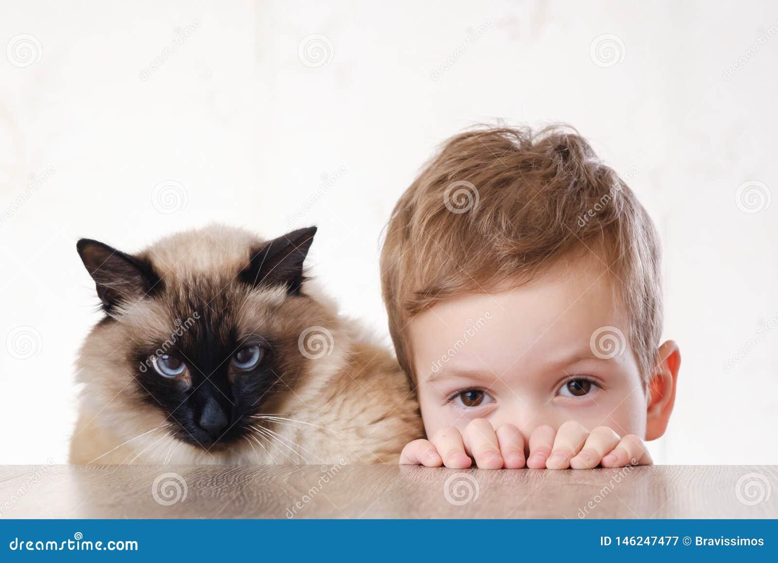 Балиец ребенка кота совместно сыграть молодой