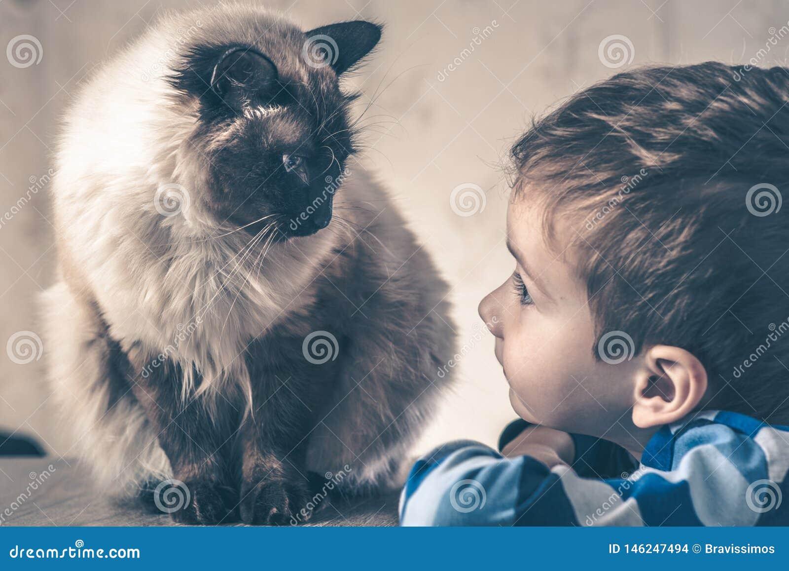 Балиец ребенка кота совместно сыграть товарищ привязанности