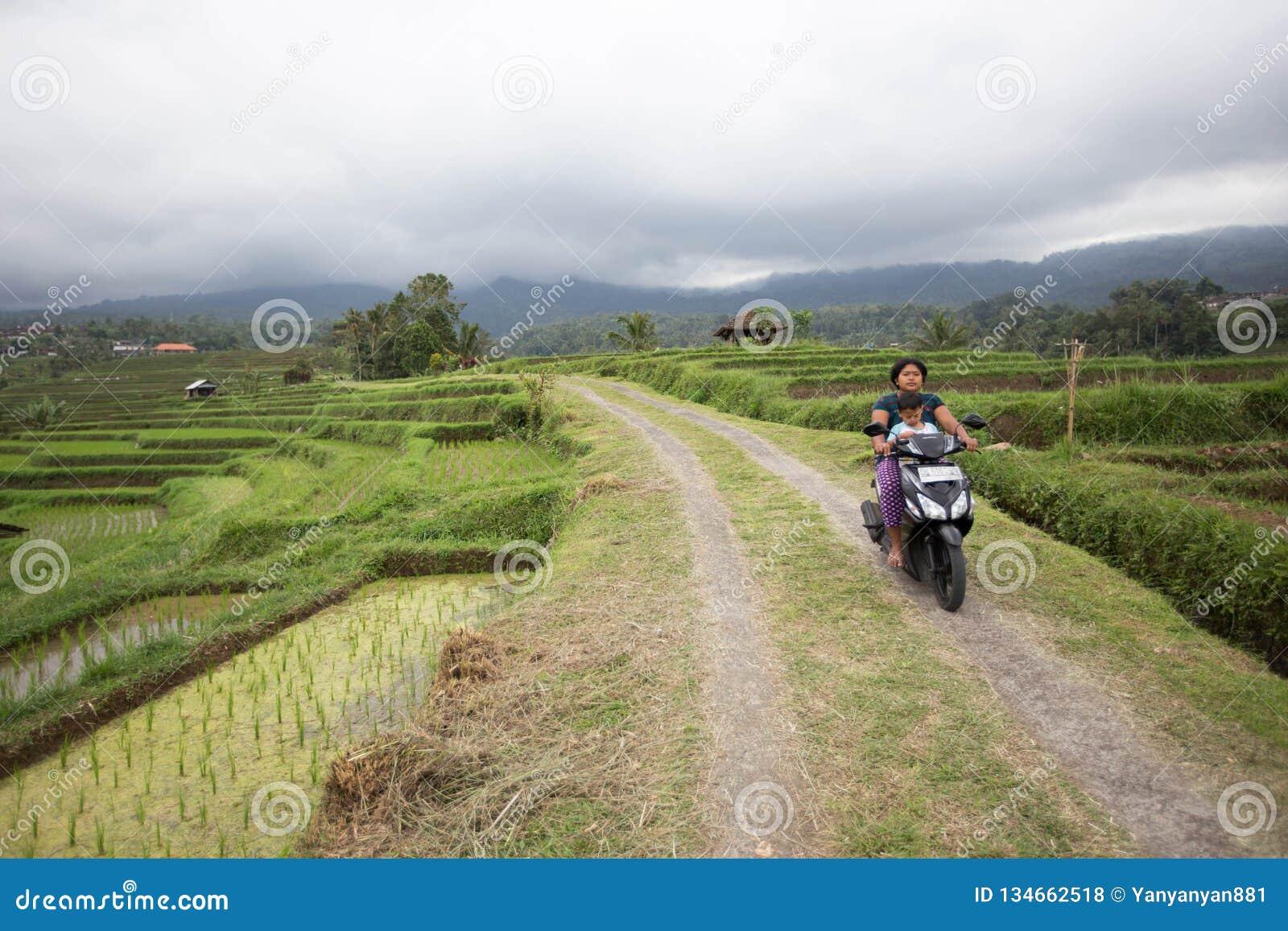 Балийская женщина едет скутер с ее ребенком в террасах риса Бали