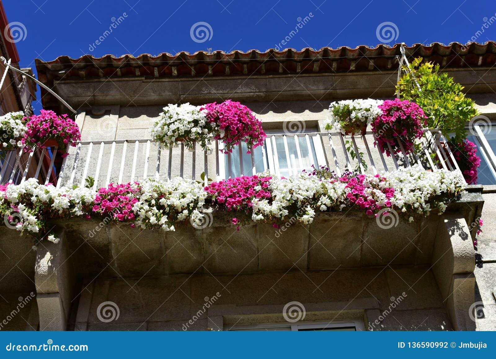 Балкон с белыми и розовыми цветками Солнечный день, голубое небо Понтеведра, старый городок, Галиция, Испания