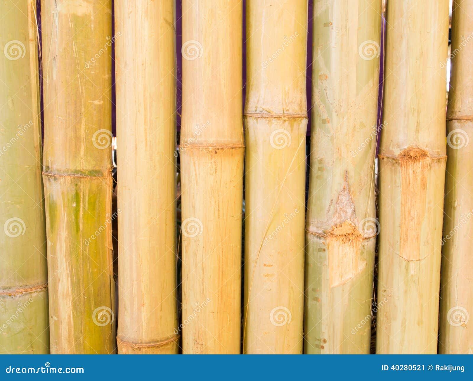 Бамбуковая предпосылка загородки