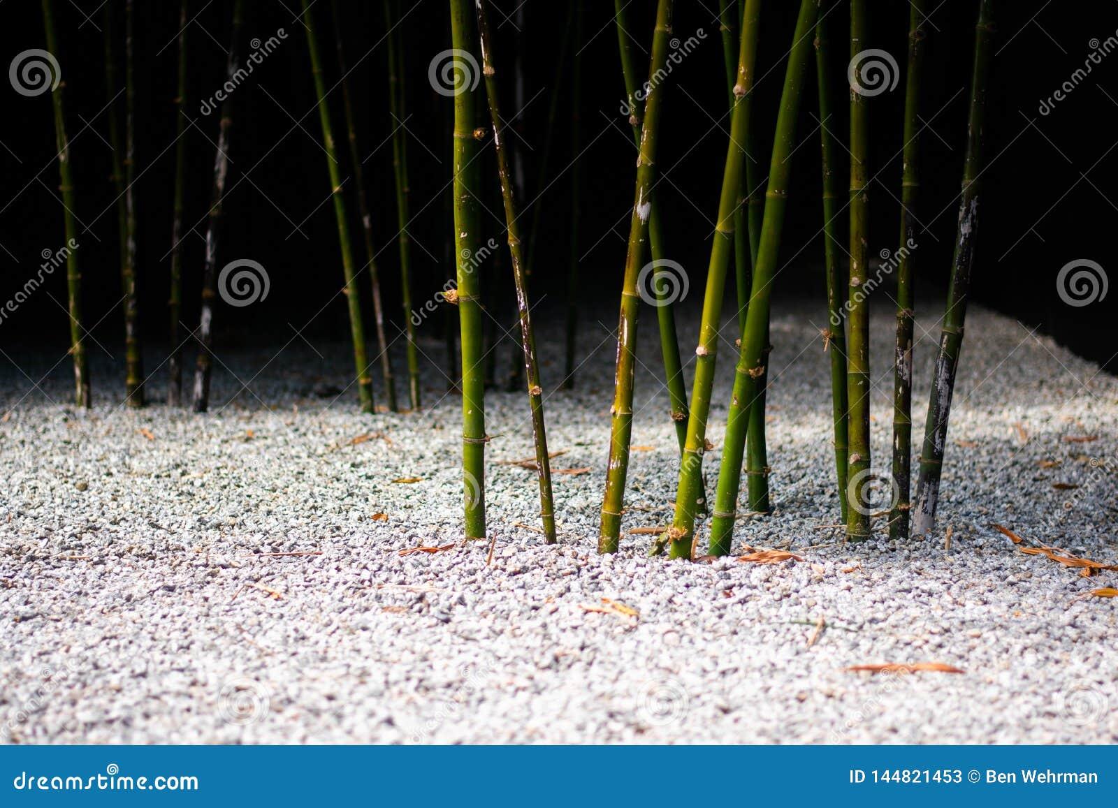 Бамбуковые всходы в саде дзэна