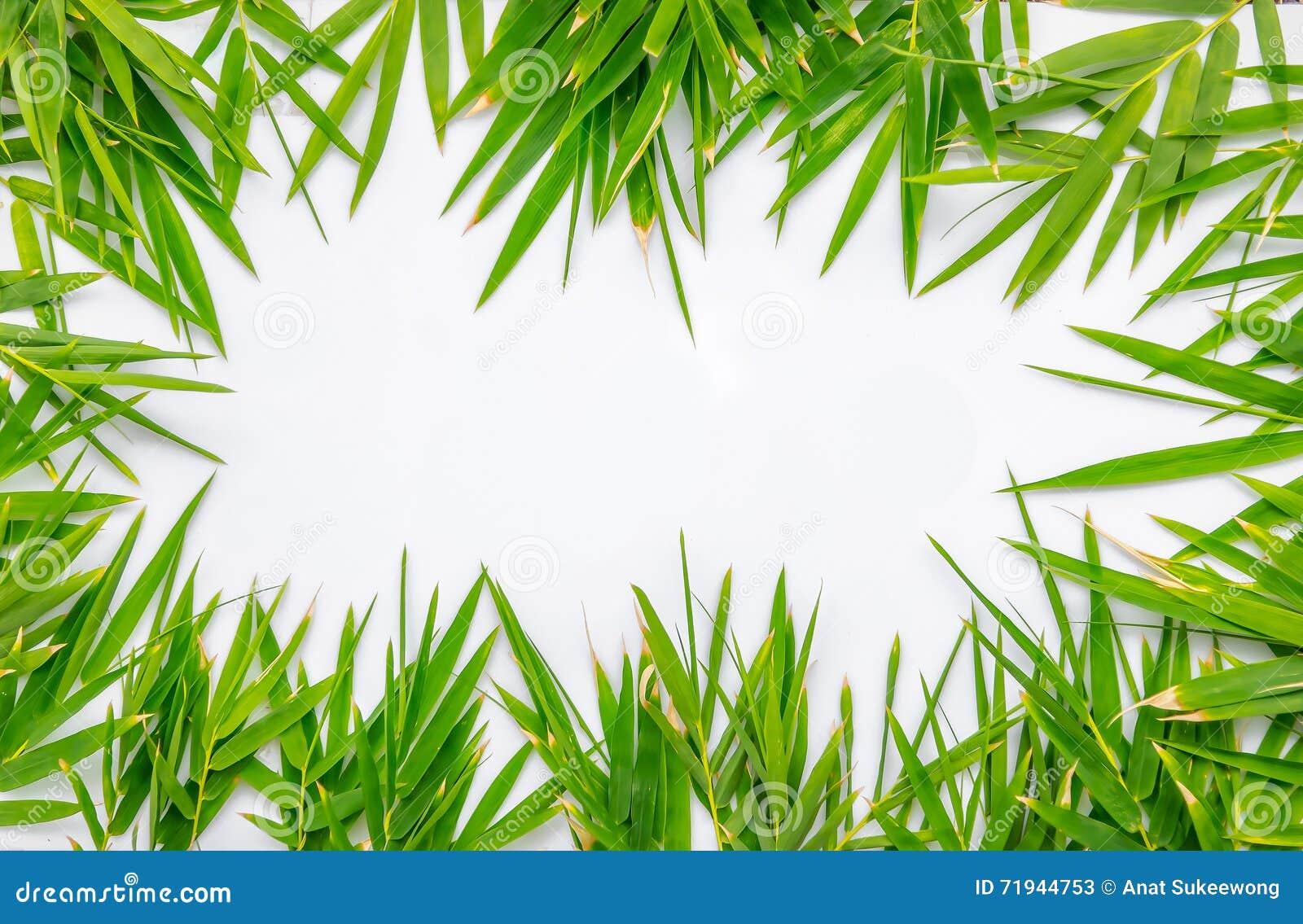 Бамбук выходит рамка