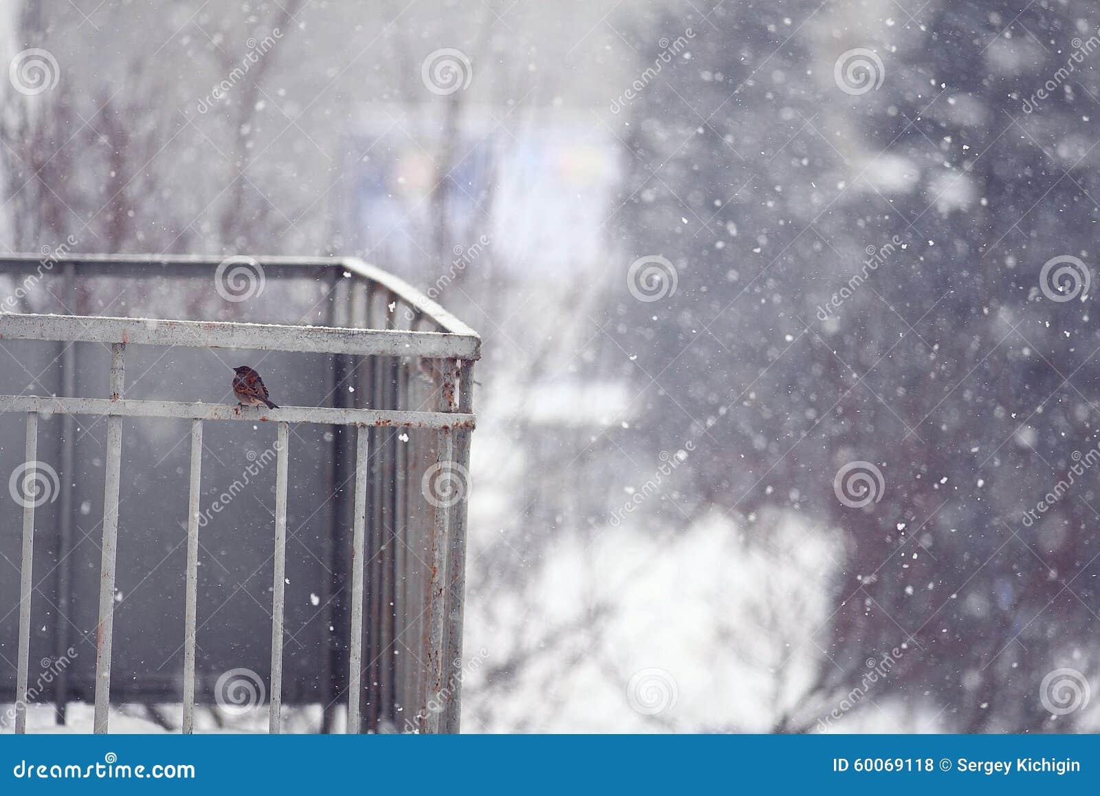 Een Winters Balkon : Балкон с маленьким воробьем Стоковое Фото изображение