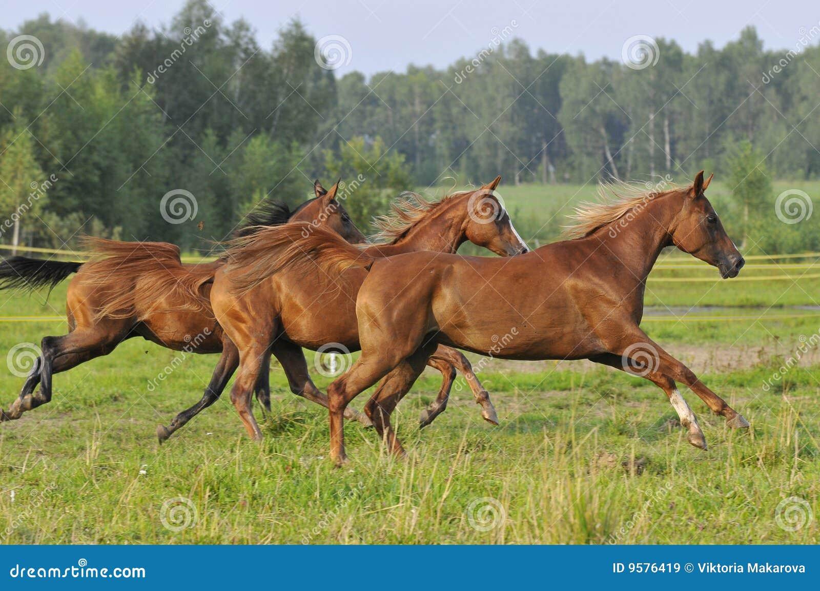 бег 3 лошадей gallop