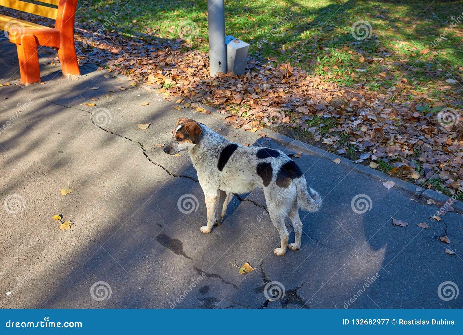 Бездомная собака Бездомные милые прогулки в парке Собака отдыхая на лужайке Милый маленький doggie помехи укрытия собак