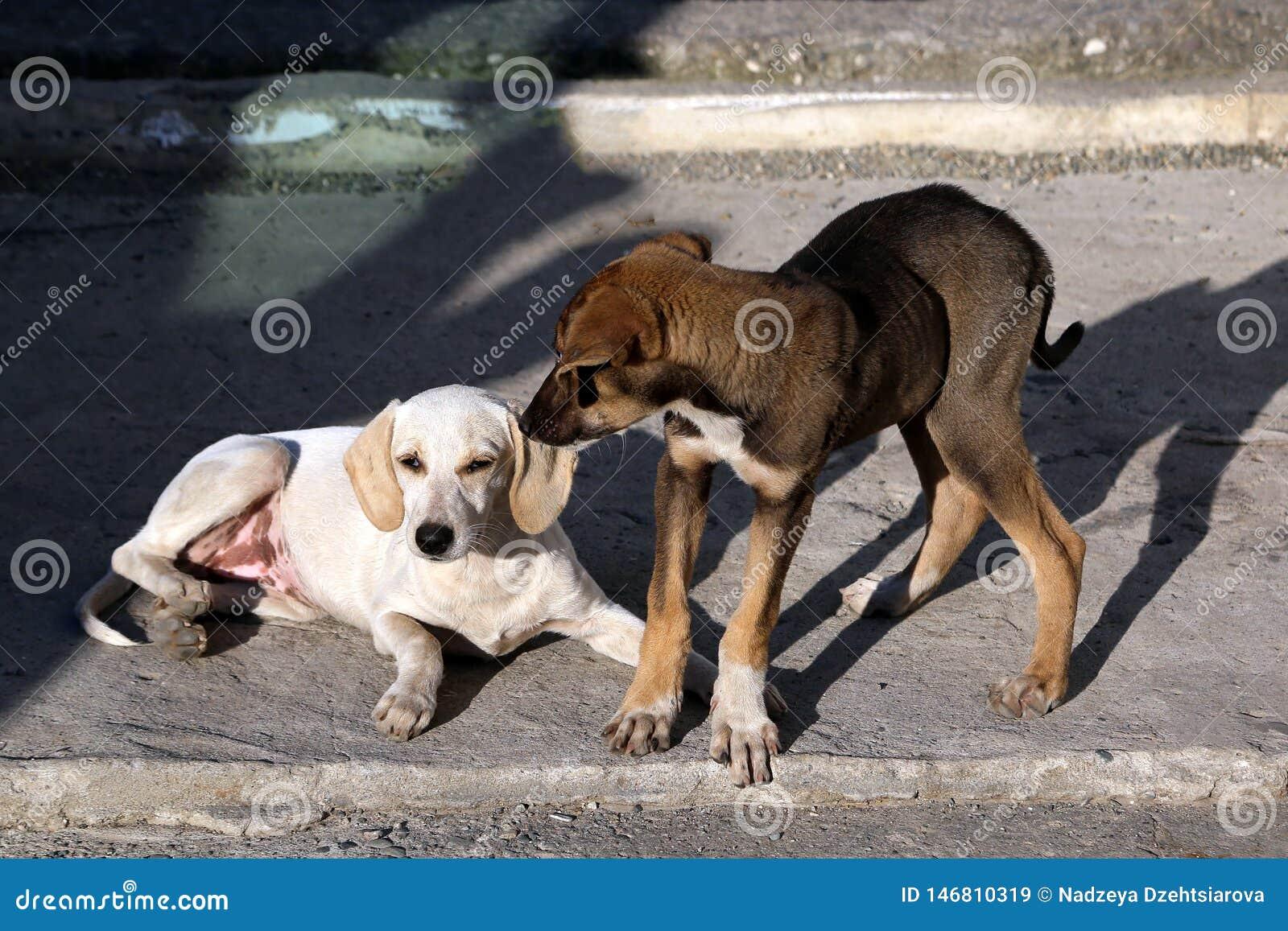 Бездомные щенята играя на мостовой