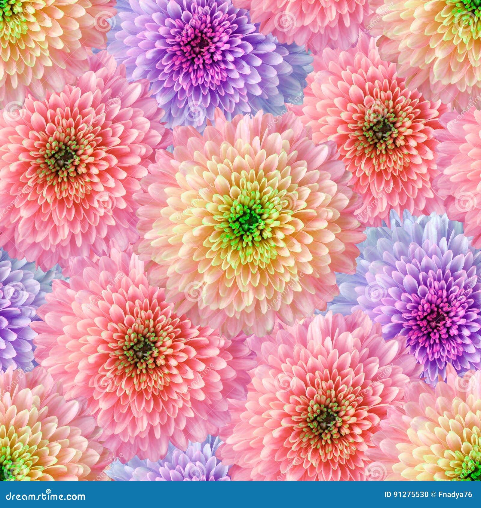 Безшовная бесконечная флористическая предпосылка для дизайна и печатания Предпосылка естественных хризантем Обои
