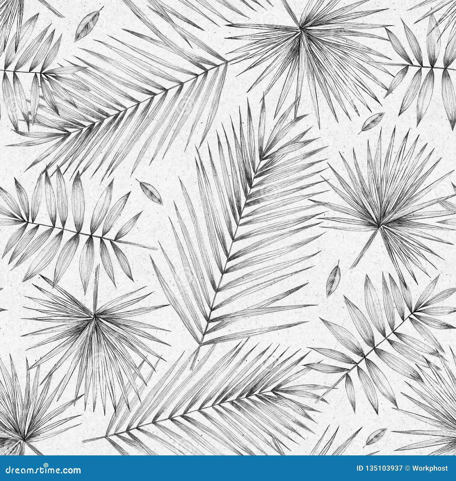 Безшовная картина с листьями ладони сбор винограда милой иллюстрации птиц установленный Простой чертеж карандаша Ручные графики Д