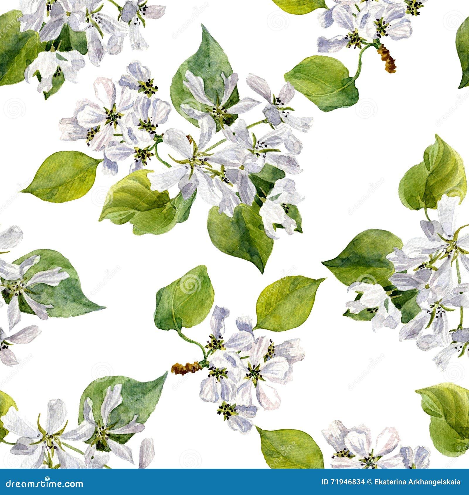 Безшовная картина с цветками яблони акварели