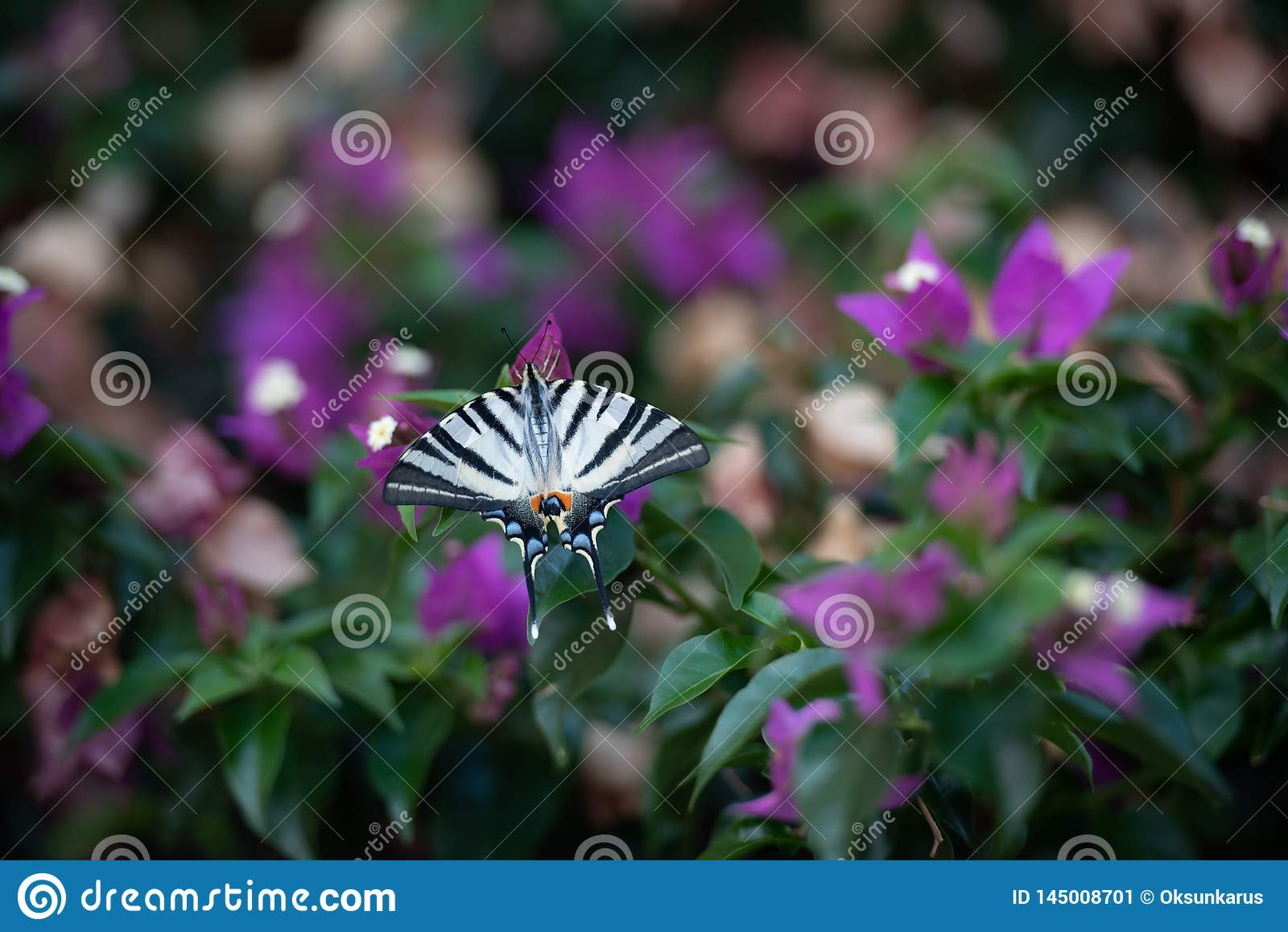 Белая бабочка с черными нашивками на зеленой предпосылке с пурпурными