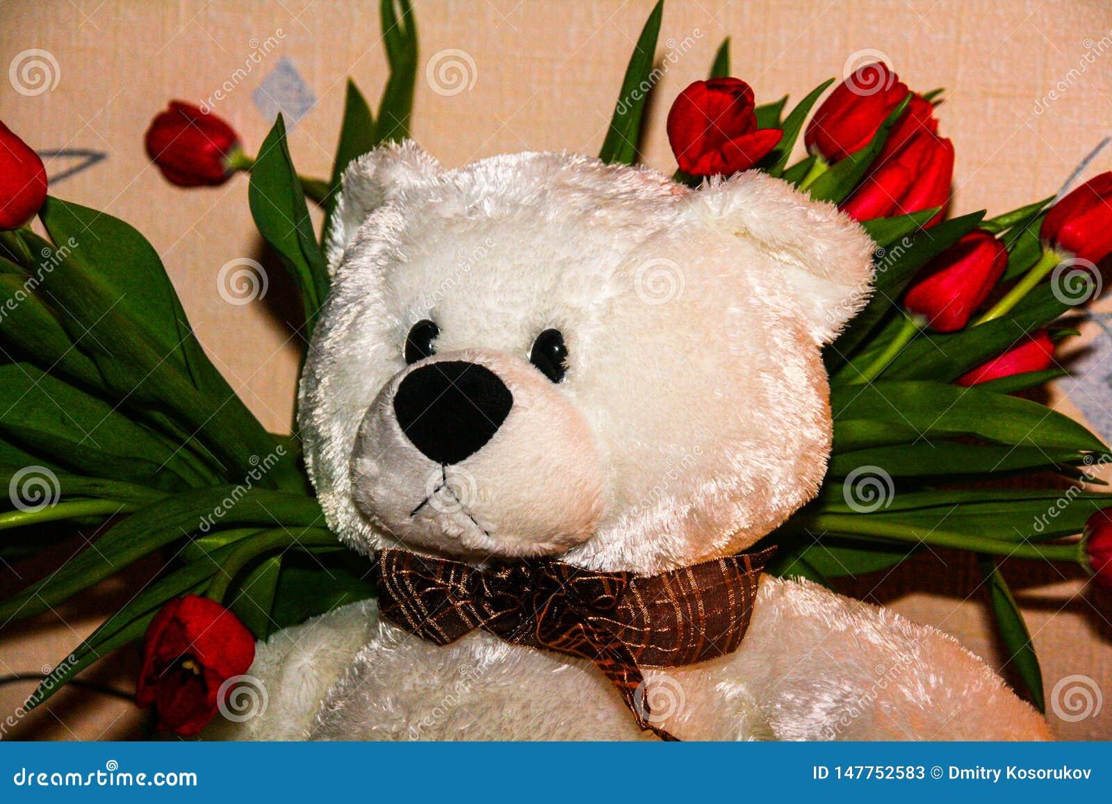 Белая плюшевый мишка на предпосылке красных тюльпанов