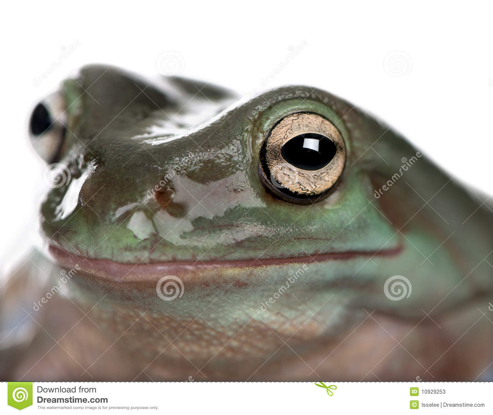 белизна вала зеленого цвета фронта лягушки предпосылки