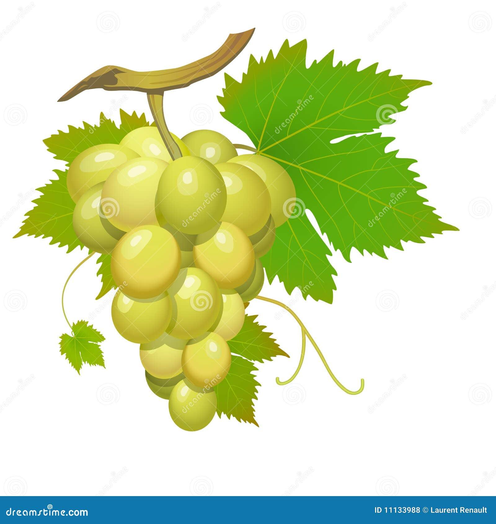 белизна виноградины