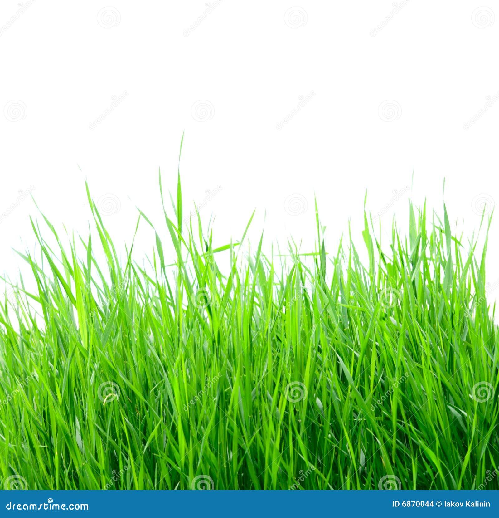 белизна зеленого цвета травы изолированная