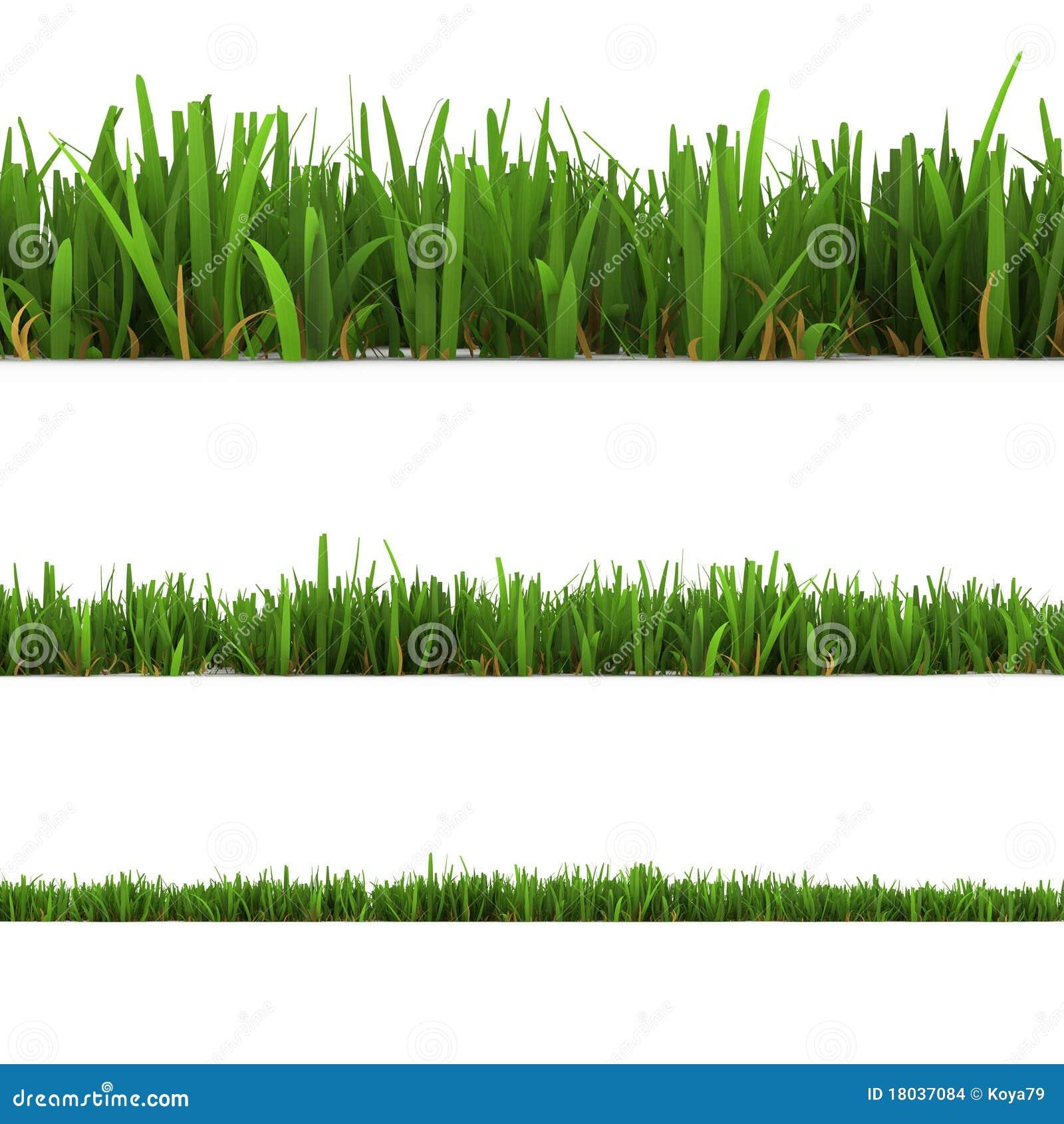 белизна изолированная травой