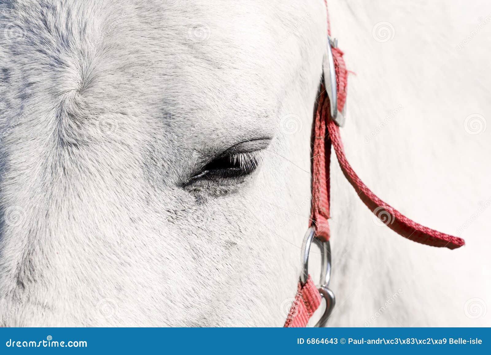белизна лошади глаза
