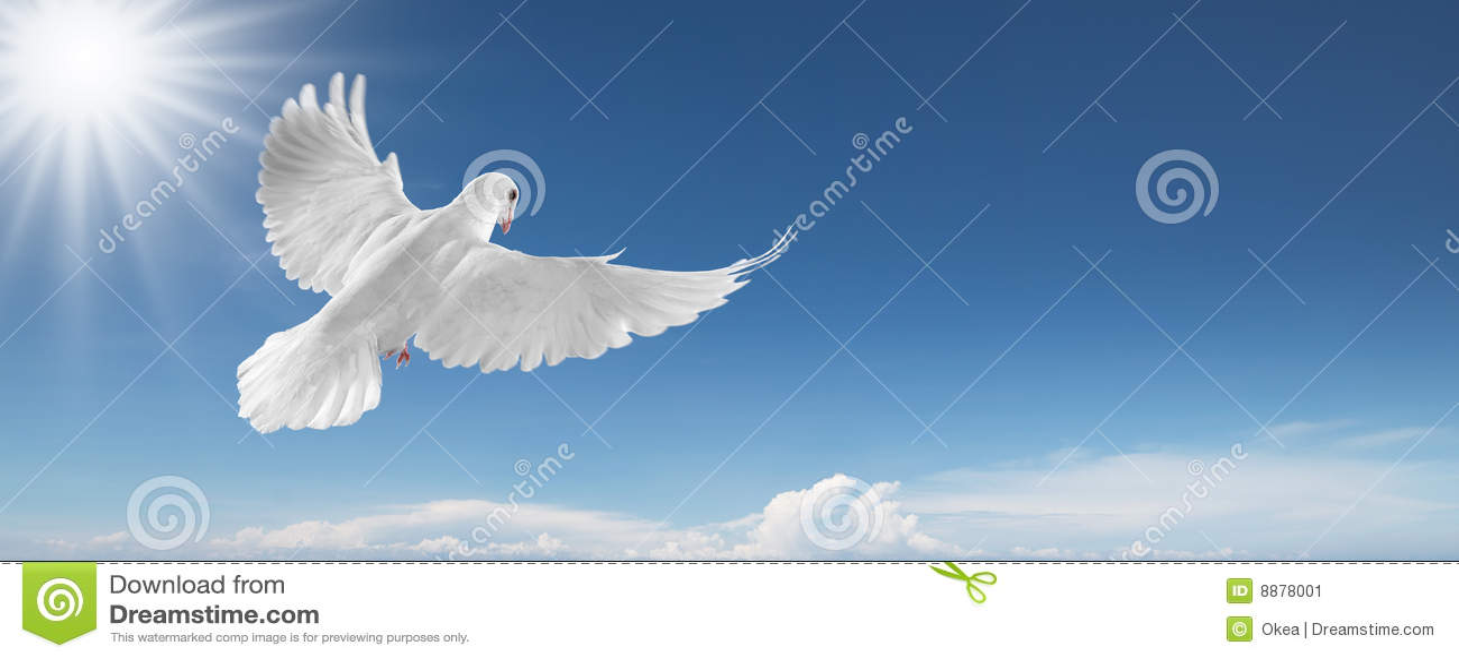 белизна неба dove