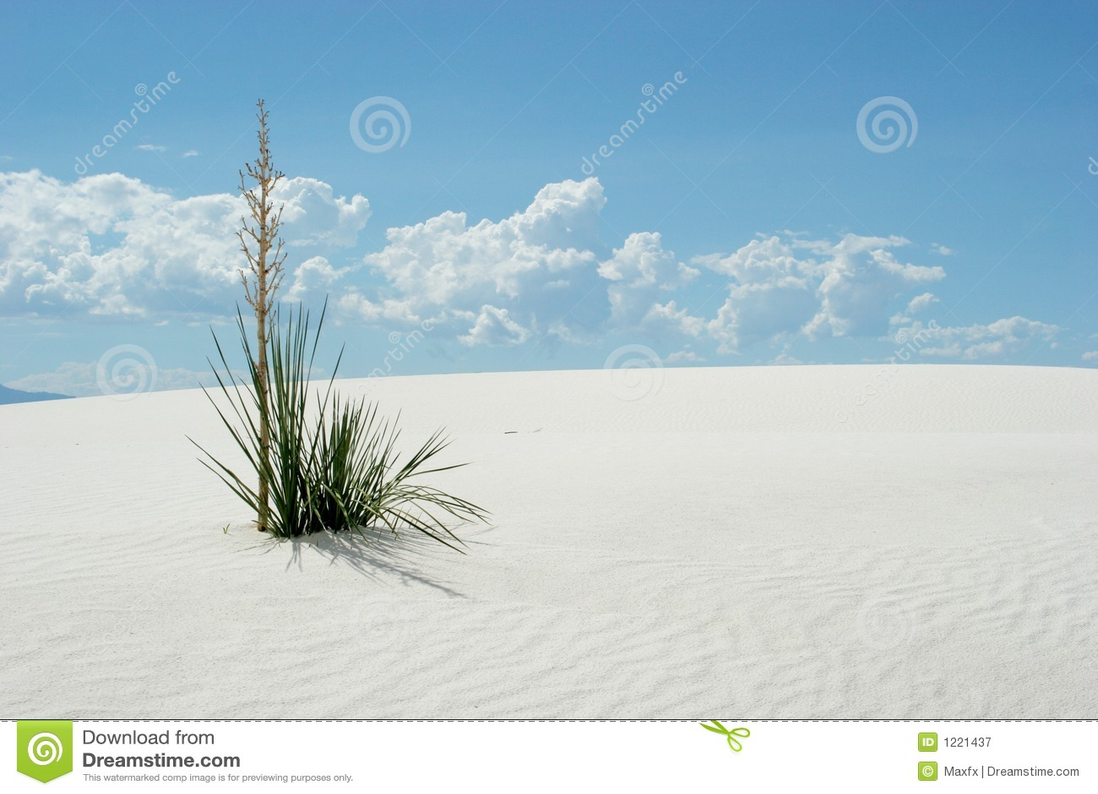 белизна песка завода дюн пустыни