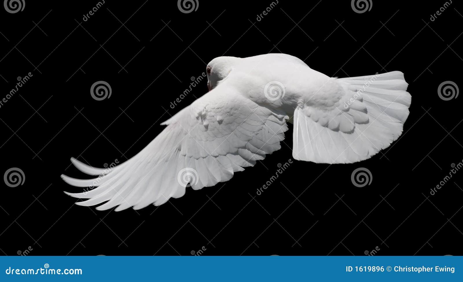 белизна полета 8 dove