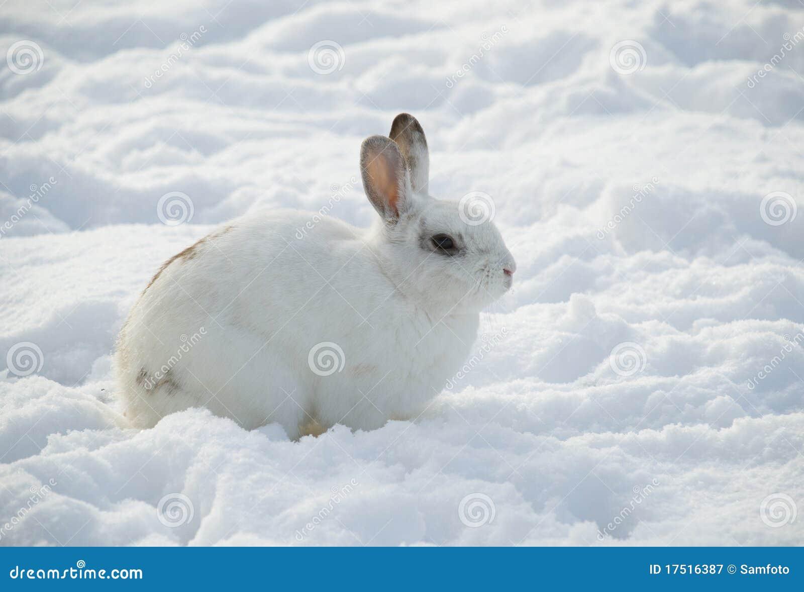 белизна снежка кролика профиля