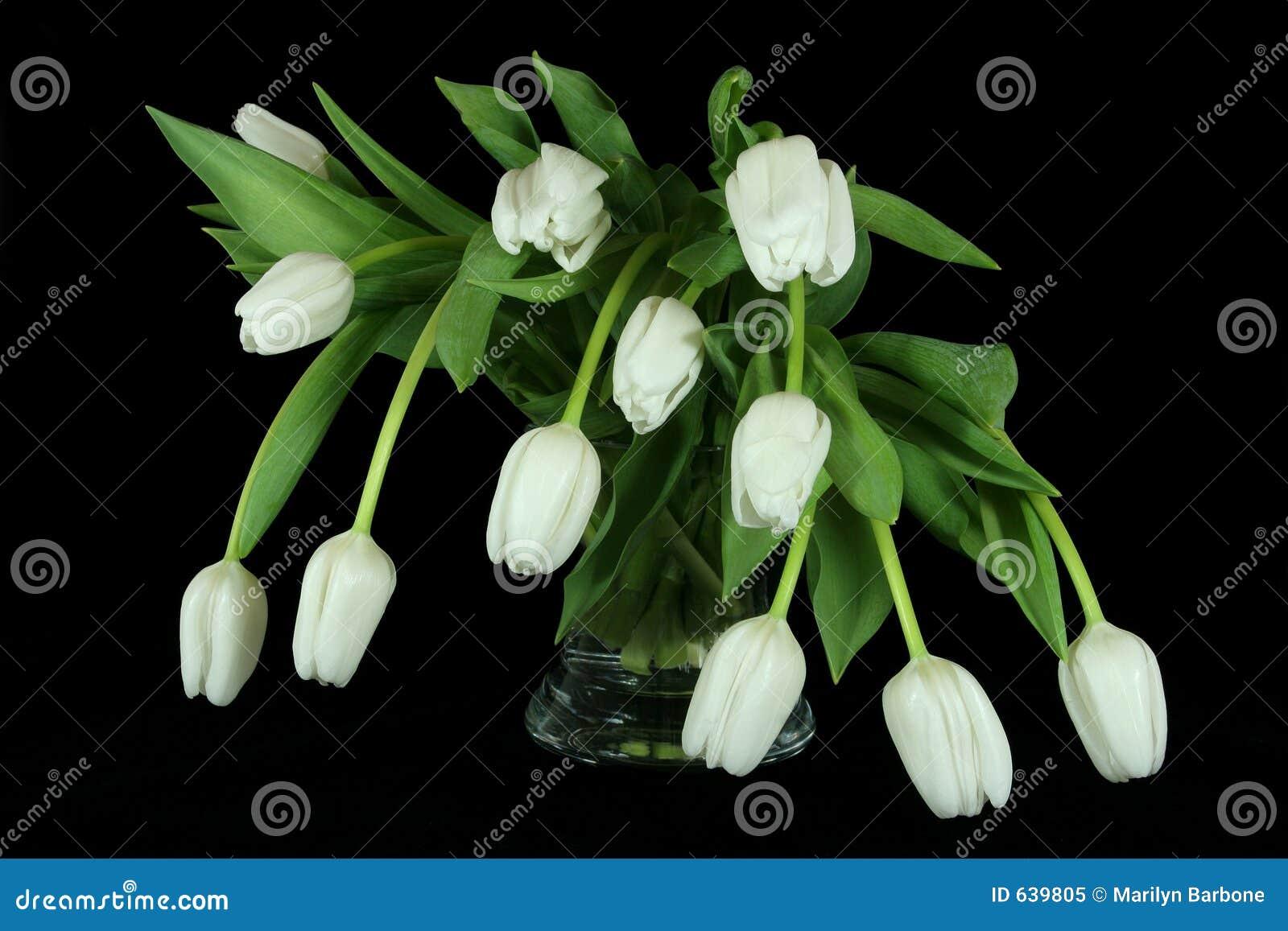 Download белизна тюльпана красоток стоковое изображение. изображение насчитывающей главный - 639805