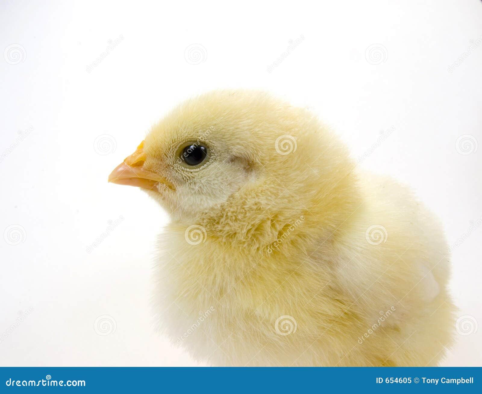 белизна цыпленока предпосылки 2 младенцев
