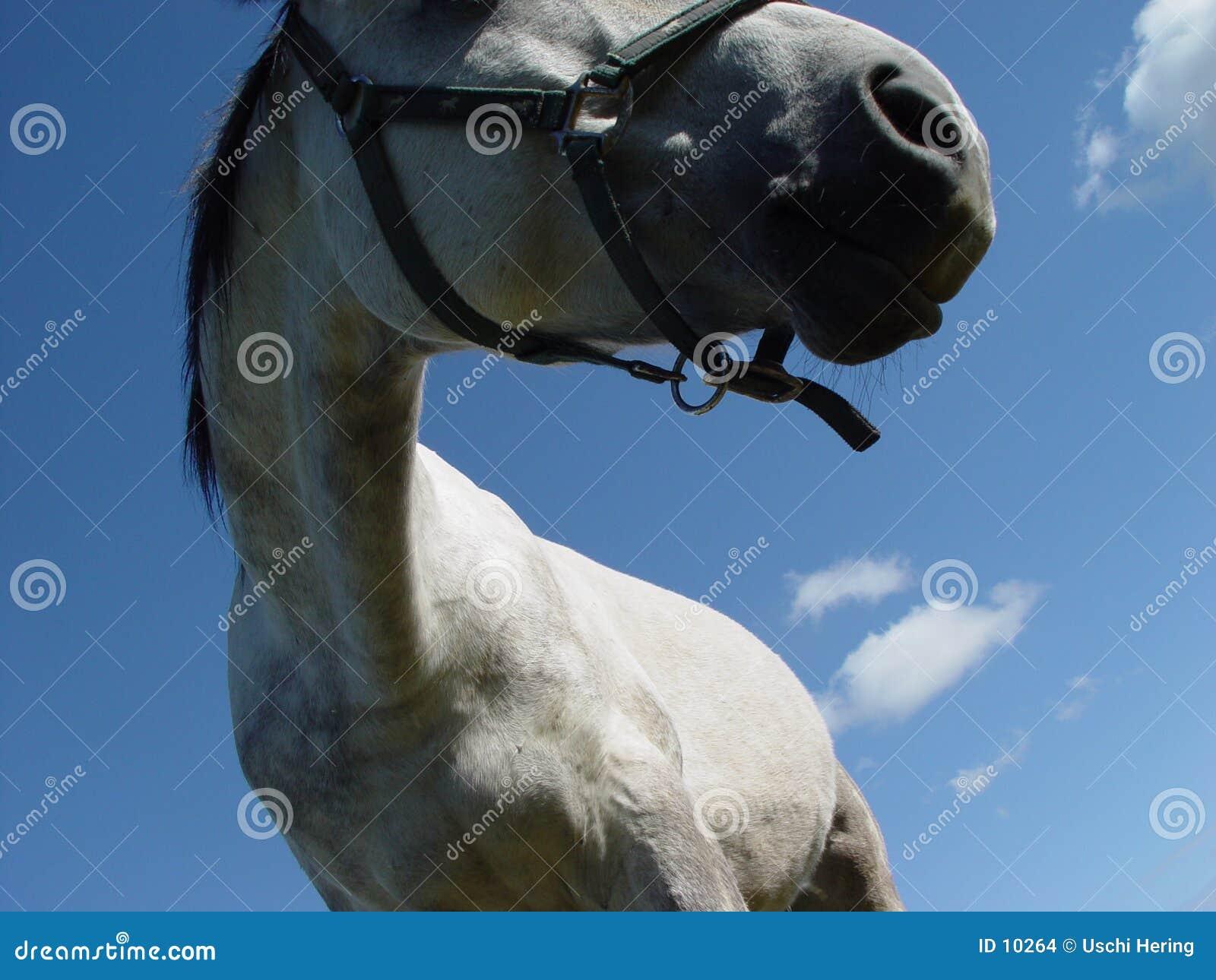 белизна 3 лошадей
