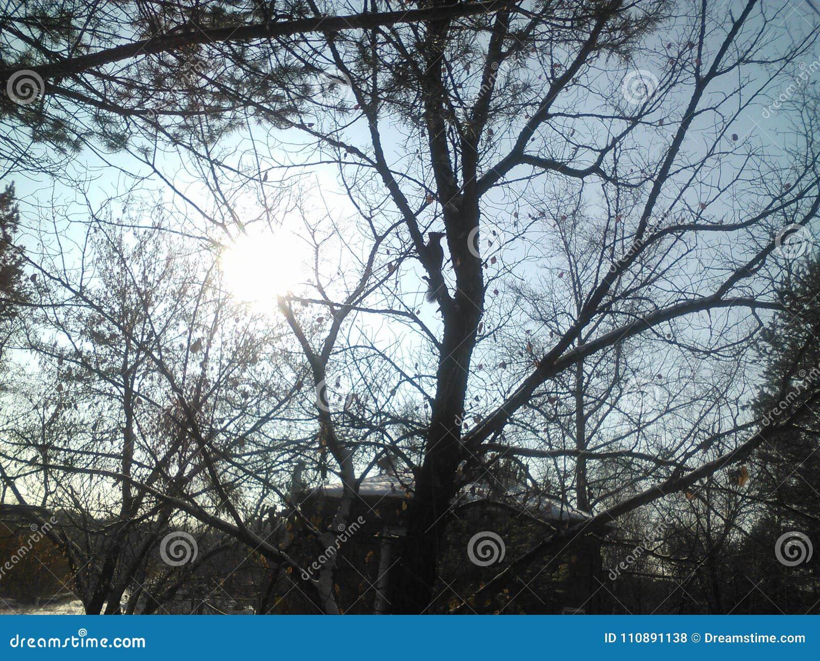 Белка дерева области Иркутска