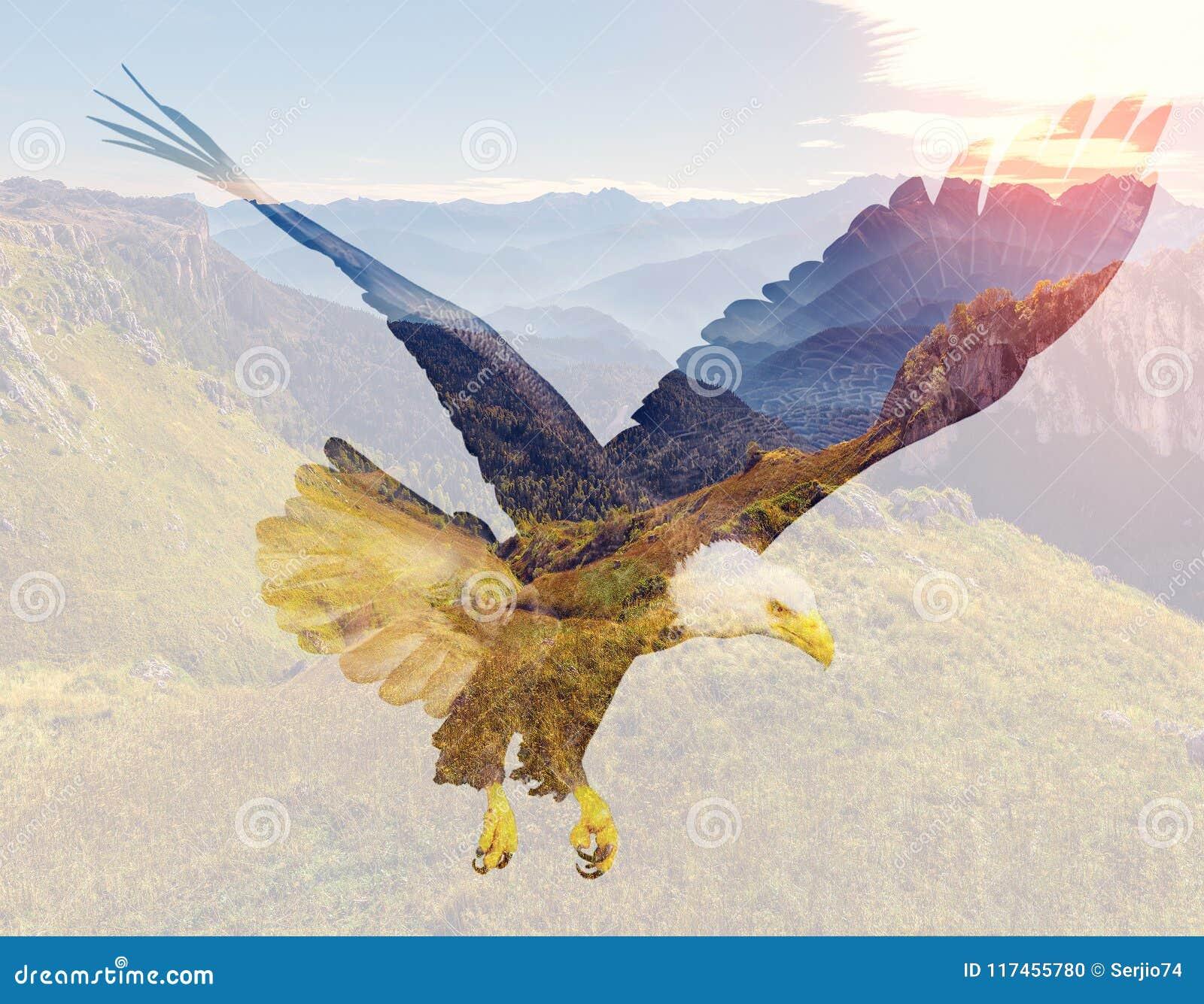 Белоголовый орлан на предпосылке ландшафта горы