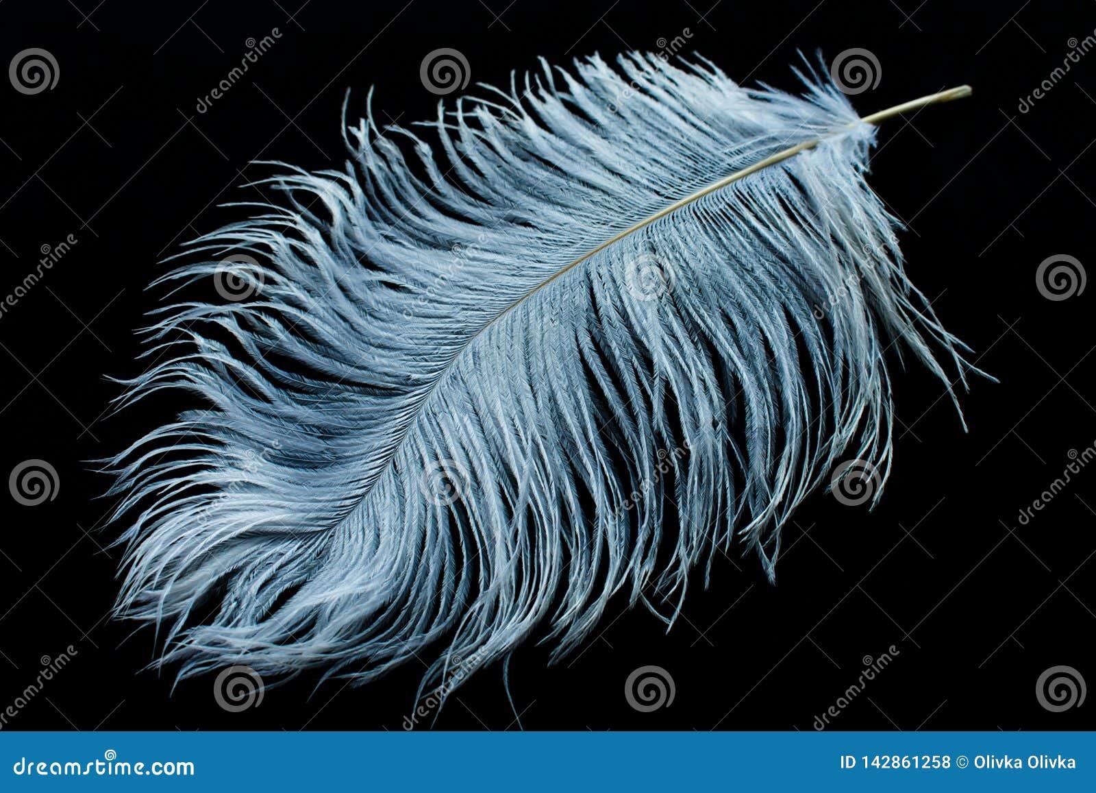 Белое перо страуса