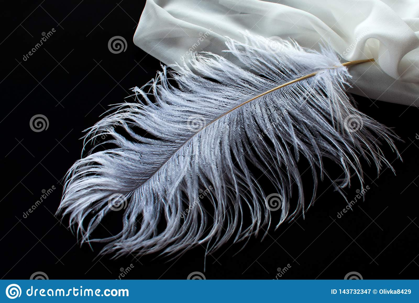 Белое перо страуса и белая ткань