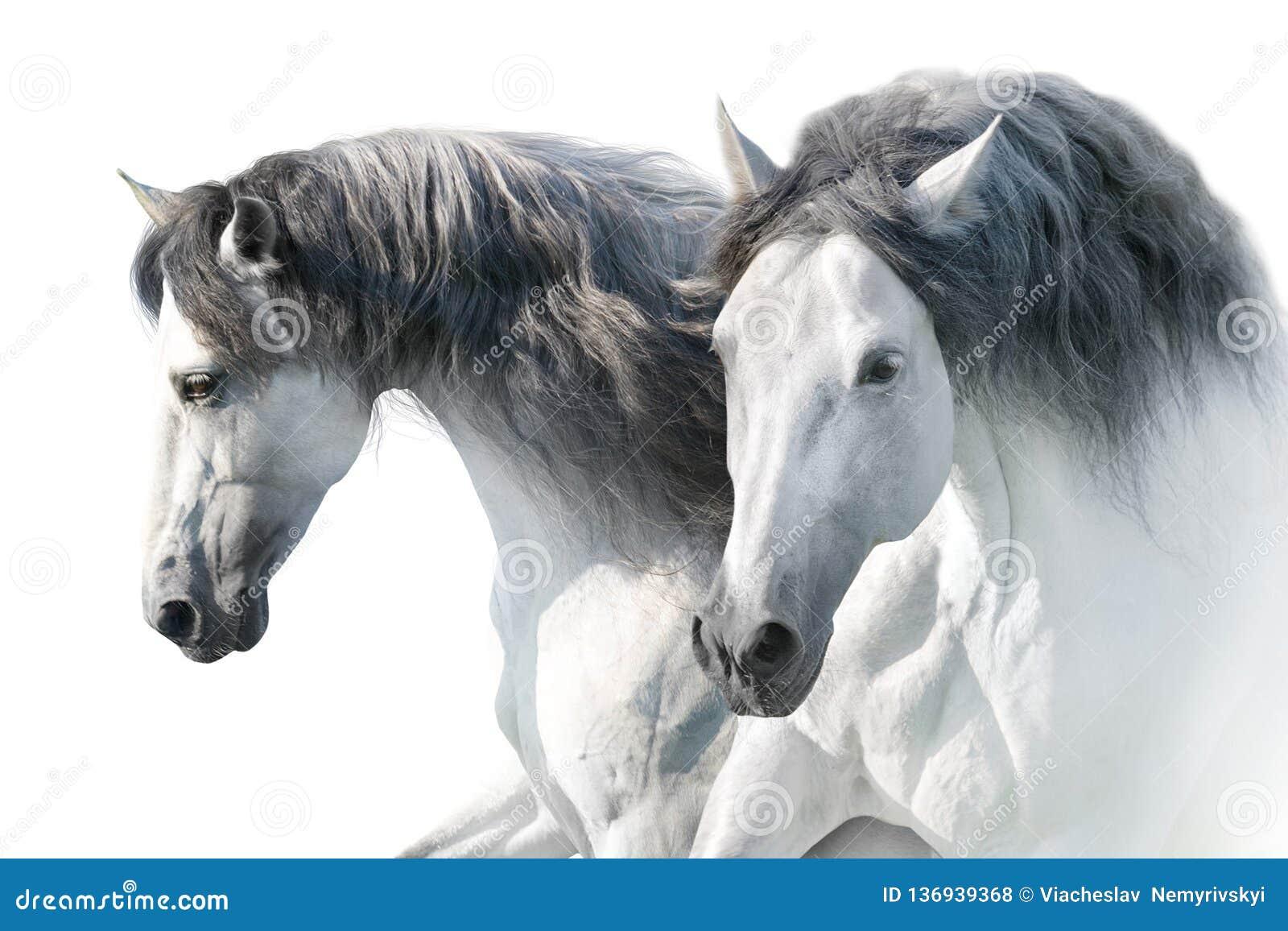 Белые лошади в светлом тоновом изображении