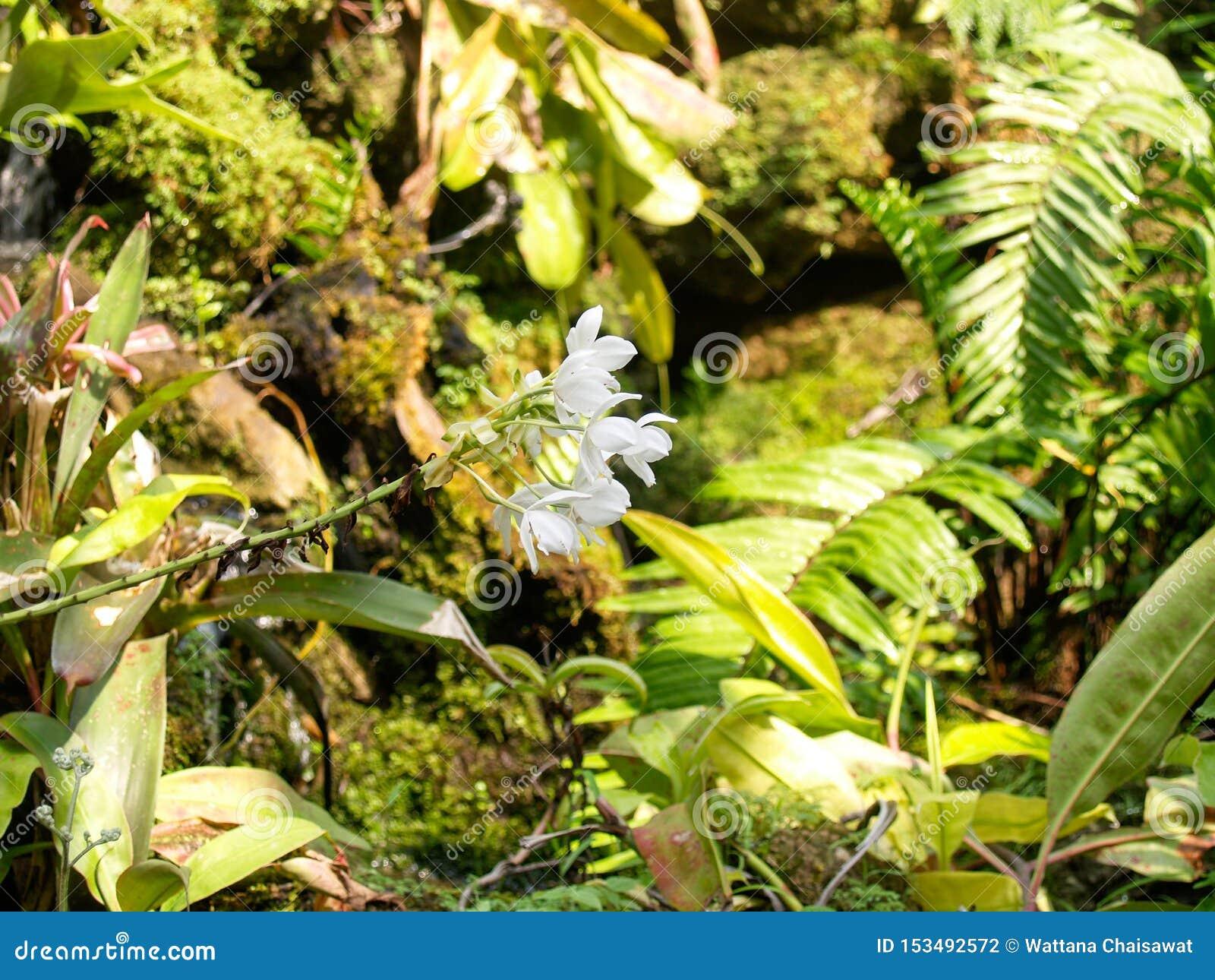 Белые цветки на задней части зеленые сады которые тенисты